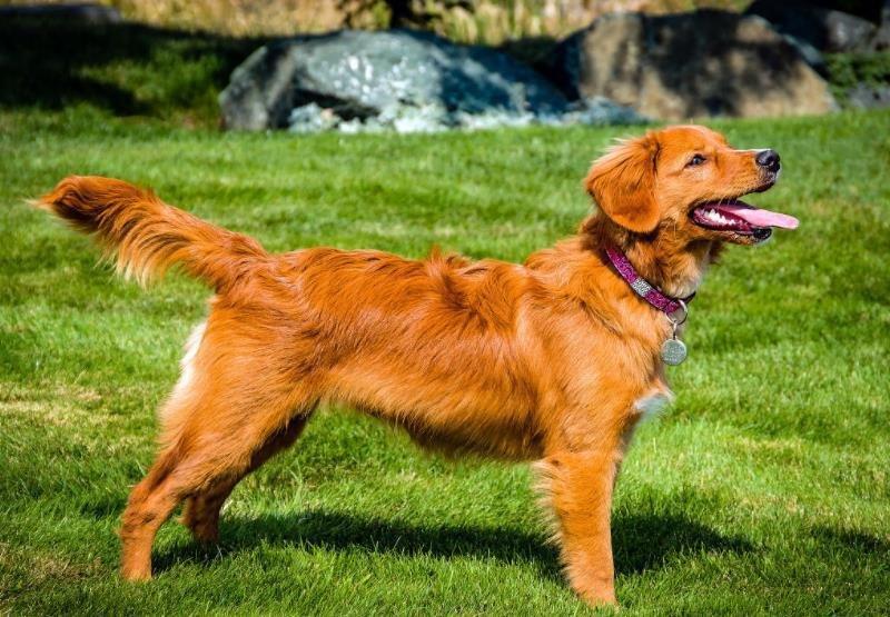 狗狗一般对什么过敏?狗狗突然过敏如何治疗